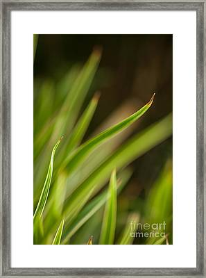 Blades Abstract 4 Framed Print by Mike Reid