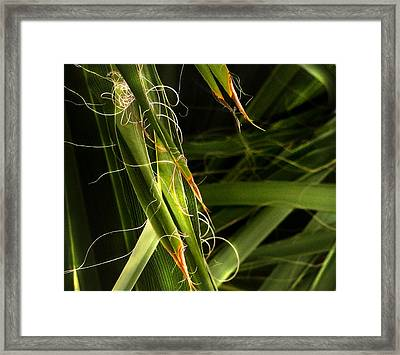 Blades Of Grass Framed Print