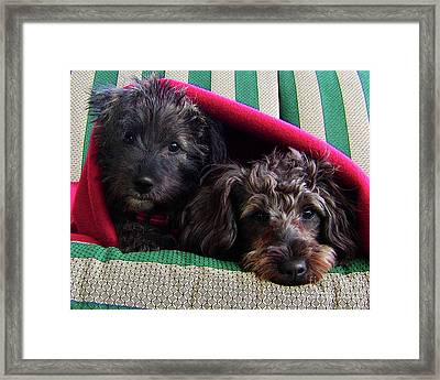 Blanket Buddies Framed Print by Terril Heilman