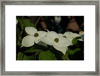 Framed Print featuring the photograph Blanket by Joseph Yarbrough