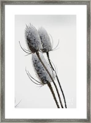 Blanketed In Snow Framed Print by JT Lewis