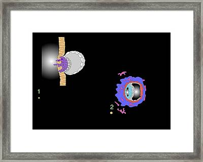 Blastocyst Implantation, Artwork Framed Print by Francis Leroy, Biocosmos