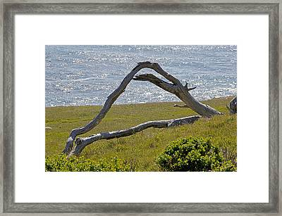 Bleached Wood And Diamond Waves Framed Print by Mick Anderson