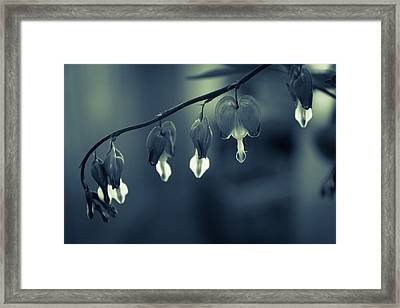 Bleeding Heart Framed Print