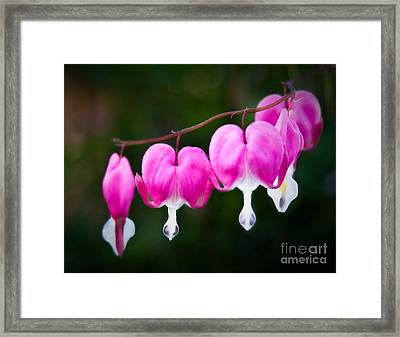 Framed Print featuring the photograph Bleeding Hearts 001 by Larry Carr