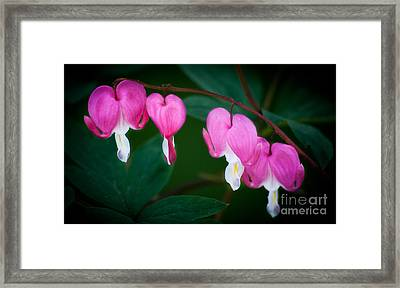 Framed Print featuring the photograph Bleeding Hearts 002 by Larry Carr