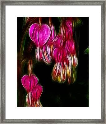 Bleeding Hearts  01 Framed Print