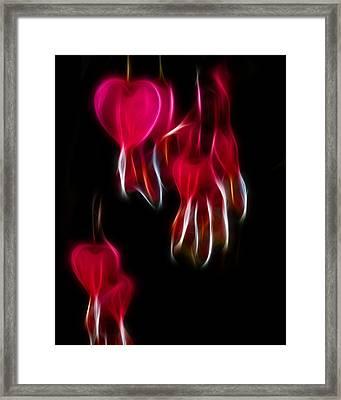 Bleeding Hearts 02 Framed Print by Paul Ward