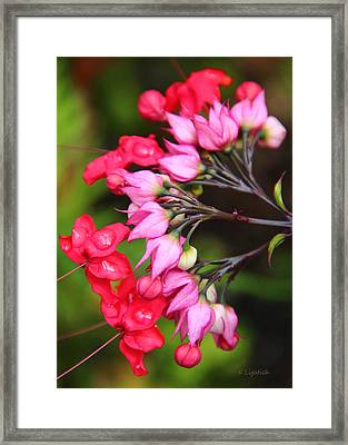 Framed Print featuring the photograph Bleeding Hearts by Kerri Ligatich
