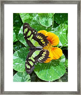 Framed Print featuring the photograph Blend My Colors by Susi Stroud
