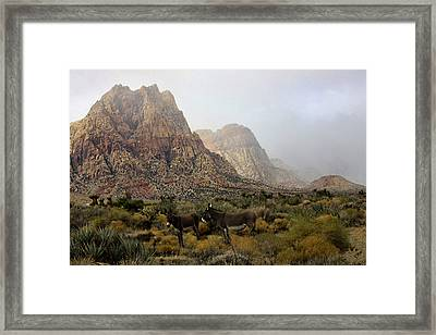 Framed Print featuring the photograph Blending In by Tammy Espino