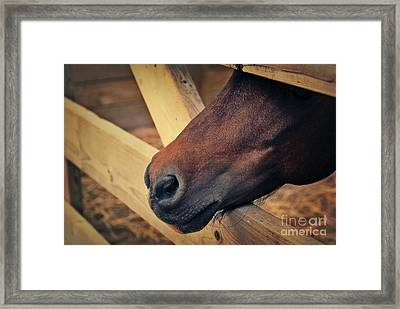 Blind Prisoner Framed Print by Aimelle