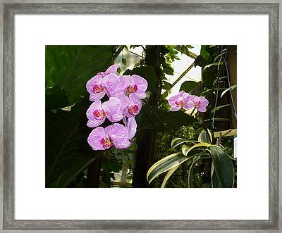 Framed Print featuring the photograph Bliss by Sheila Silverstein