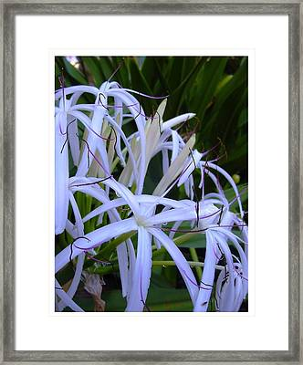 Framed Print featuring the photograph Blissfully by Frank Wickham