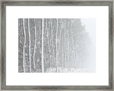 Blizzard Blankets Trees In Snow Framed Print