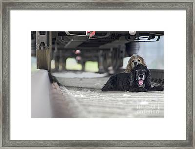 Blonde And Black Dogs Framed Print by Mats Silvan