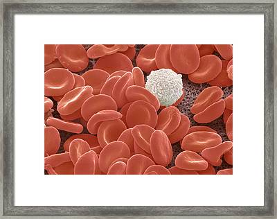Blood Cells Framed Print by Power And Syred