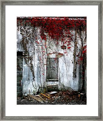Blood Ivy Framed Print