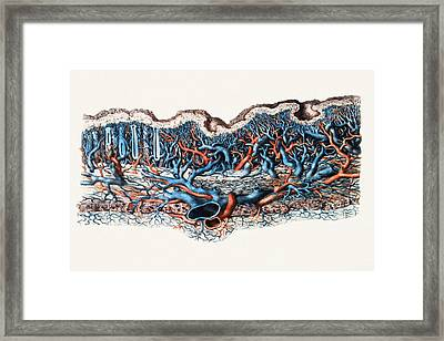 Blood Vessels In Stomach Wall Framed Print by Mehau Kulyk