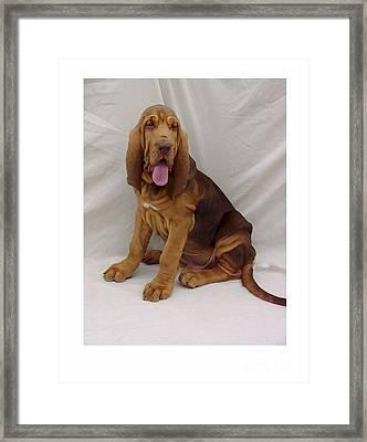 Bloodhound 112 Framed Print by Larry Matthews