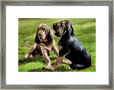 Bloodhound Playtime Framed Print by Barbara Walker