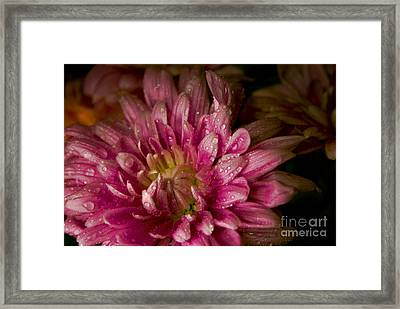 Bloom Framed Print by David Taylor