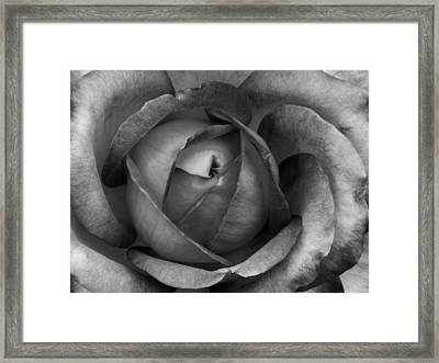 Framed Print featuring the photograph Blooming 2 by Michelle Joseph-Long