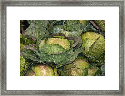 Blooming Cabbage Heads Framed Print by Dina Calvarese