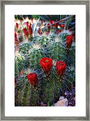 Blooming Cactus Framed Print by Bruce Bley
