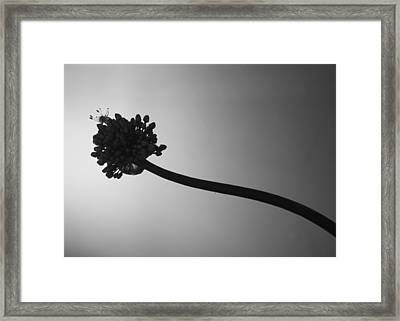 Blooming Framed Print by Ellery Russell