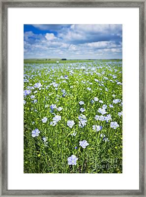 Blooming Flax Field Framed Print by Elena Elisseeva