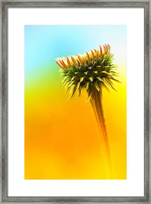 Blooming Flower Framed Print by Susan Stone