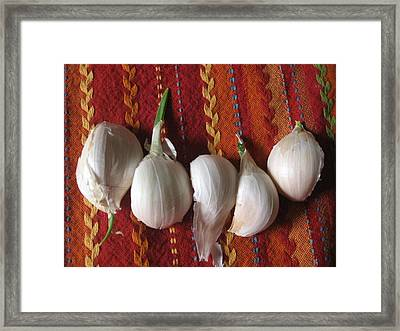 Blooming Garlic Bulbs Framed Print