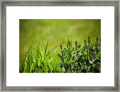 Blooming In Purple Framed Print by Christy Patino