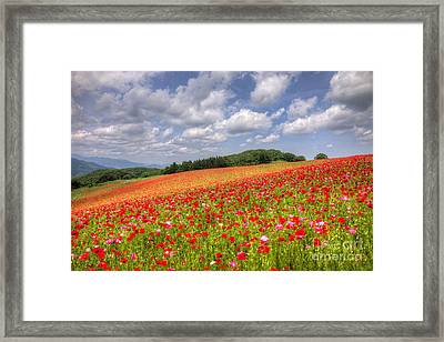 Blooming In The Plateau Framed Print by Tad Kanazaki