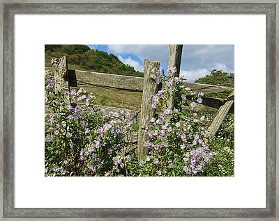 Blooming Season Framed Print by Victoria Ashley