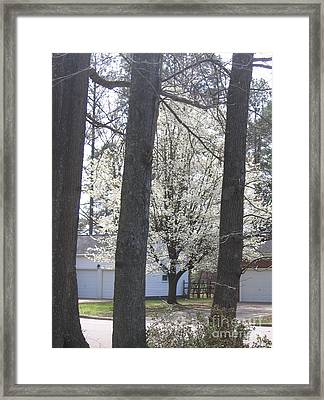 Blooming Tree Framed Print by Marlene Robbins