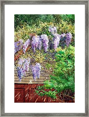 Blooming Wisteria Framed Print by Peter Sit