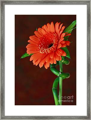Blooming With Joy Framed Print by Inspired Nature Photography Fine Art Photography