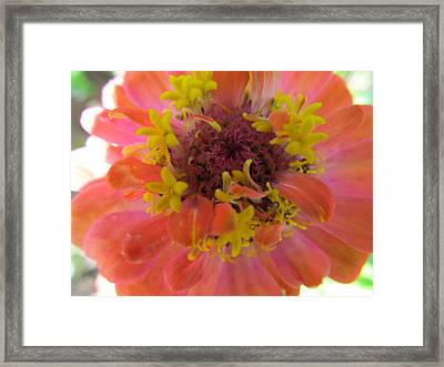 Framed Print featuring the photograph Blooming Within by Tina M Wenger
