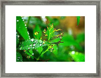 Bloomless Framed Print by Toni Hopper
