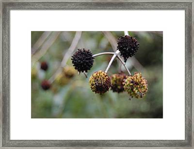 Blooms Framed Print by Beverly Hammond