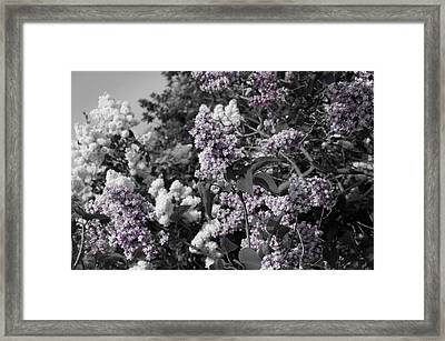 Blooms Framed Print by Colleen Coccia