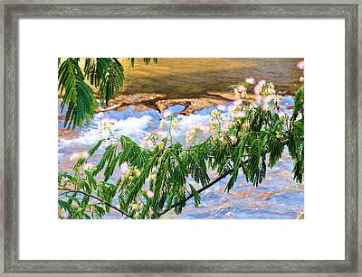 Blooms Over The River Framed Print by Jan Amiss Photography