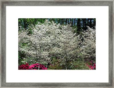 Blossom Explosion Framed Print by Christopher McPhail