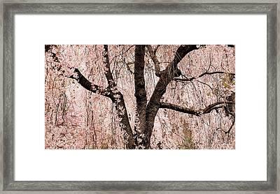Blossom Rain Framed Print