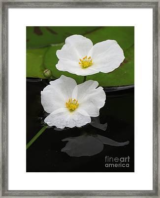 Blossom Reflection Framed Print by Darleen Stry