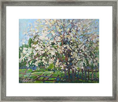 Blossoming Apple Tree Framed Print by Juliya Zhukova