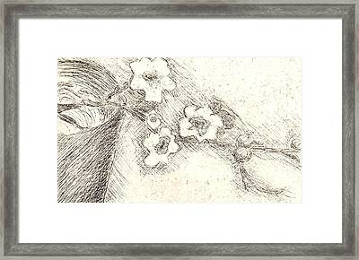 Blossoms Framed Print by Angela Conley
