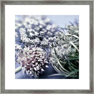 Blossoms Framed Print by HD Connelly